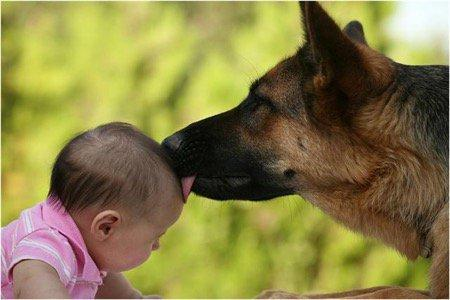 dog-and-baby-1