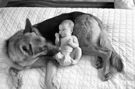 dog - german-shepherd-baby