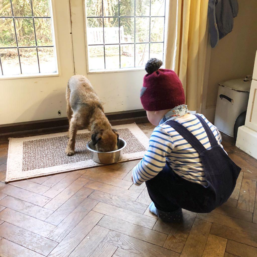 Kindness milestones - be kind to animals