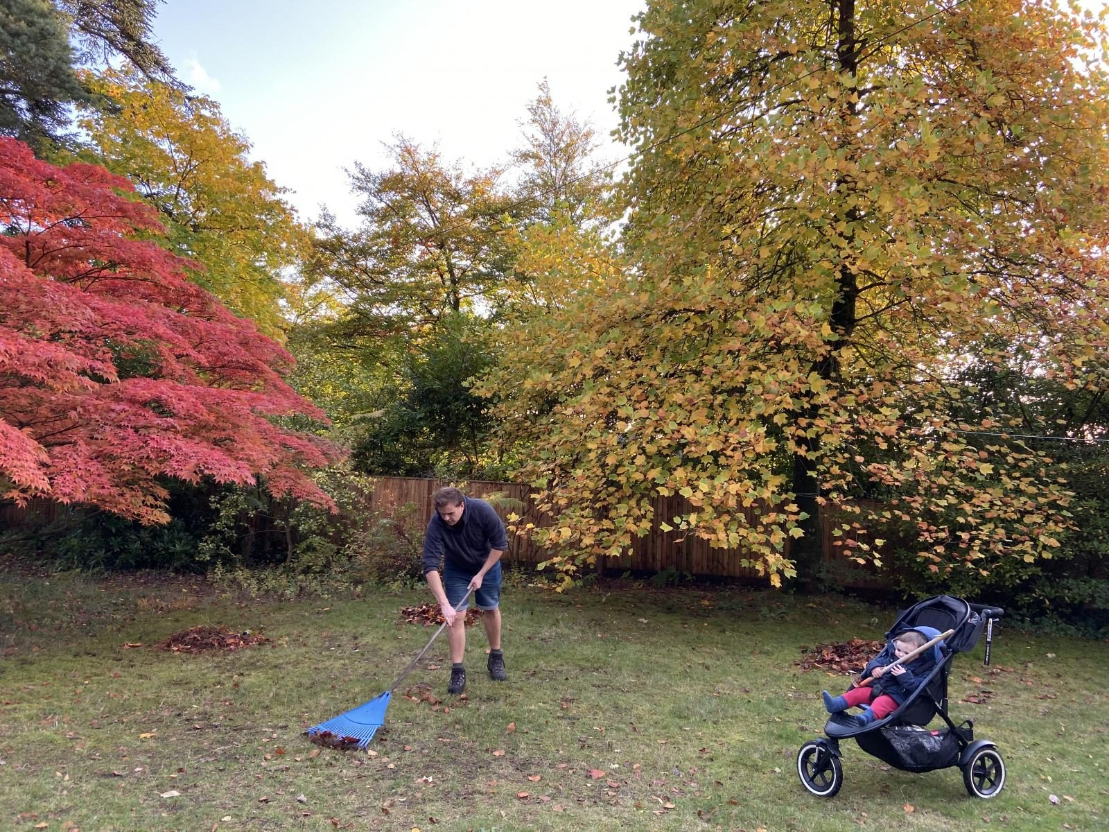 Clean up those leaves - garden jobs to do this autumn