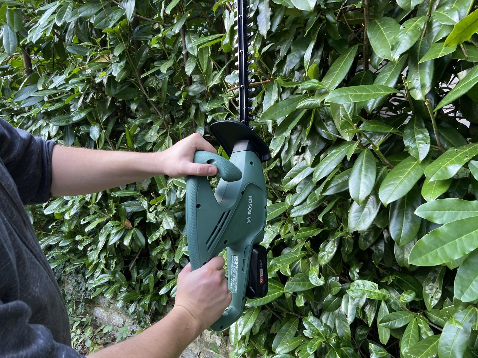 Hedge cuttings with the Bosch EasyHedgeCut 18-45