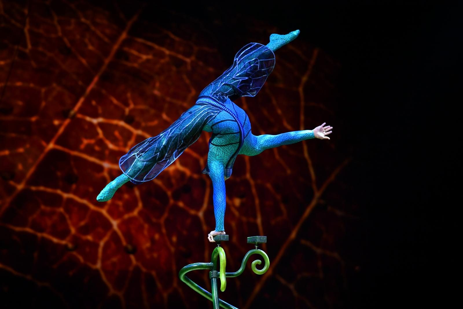You have to go see OVO…the new family spectacular from Cirque du Soleil!